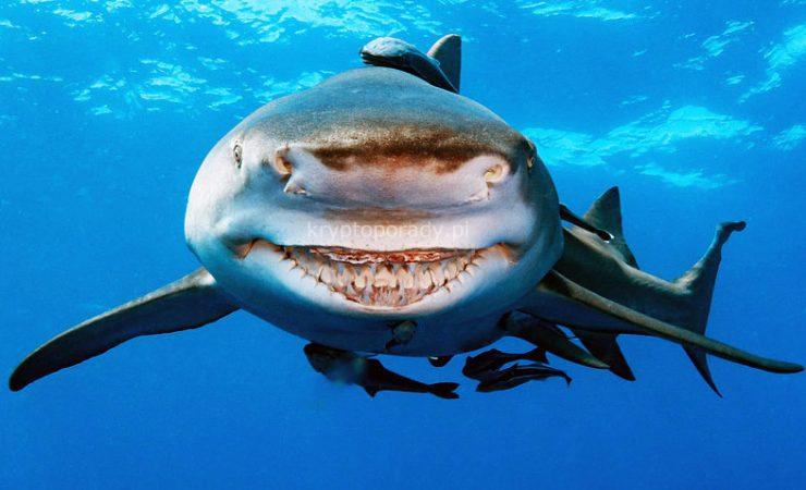 Rekiny finansów